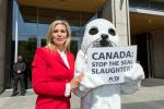 11-05-2017 Maja Princess von Hohenzollern, together with activists from the animal welfare organization PETA, demonstrating against the Canadian seal in Canada against the Canadian embassy in Berlin. 